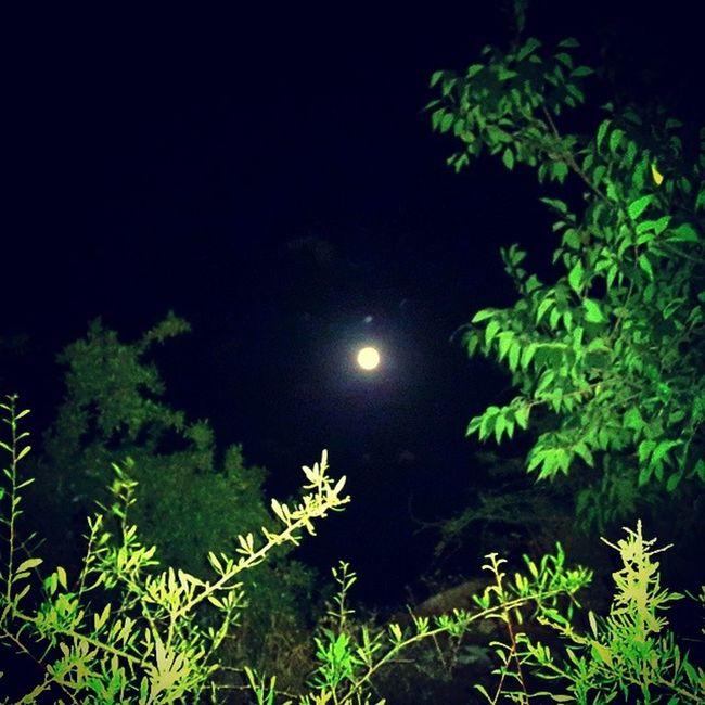 საქართველო მცხეთა ჯვარი ღამე მთვარე Georgia mtskheta night moonlight moon spontaneous dancinginthemoonlight funny