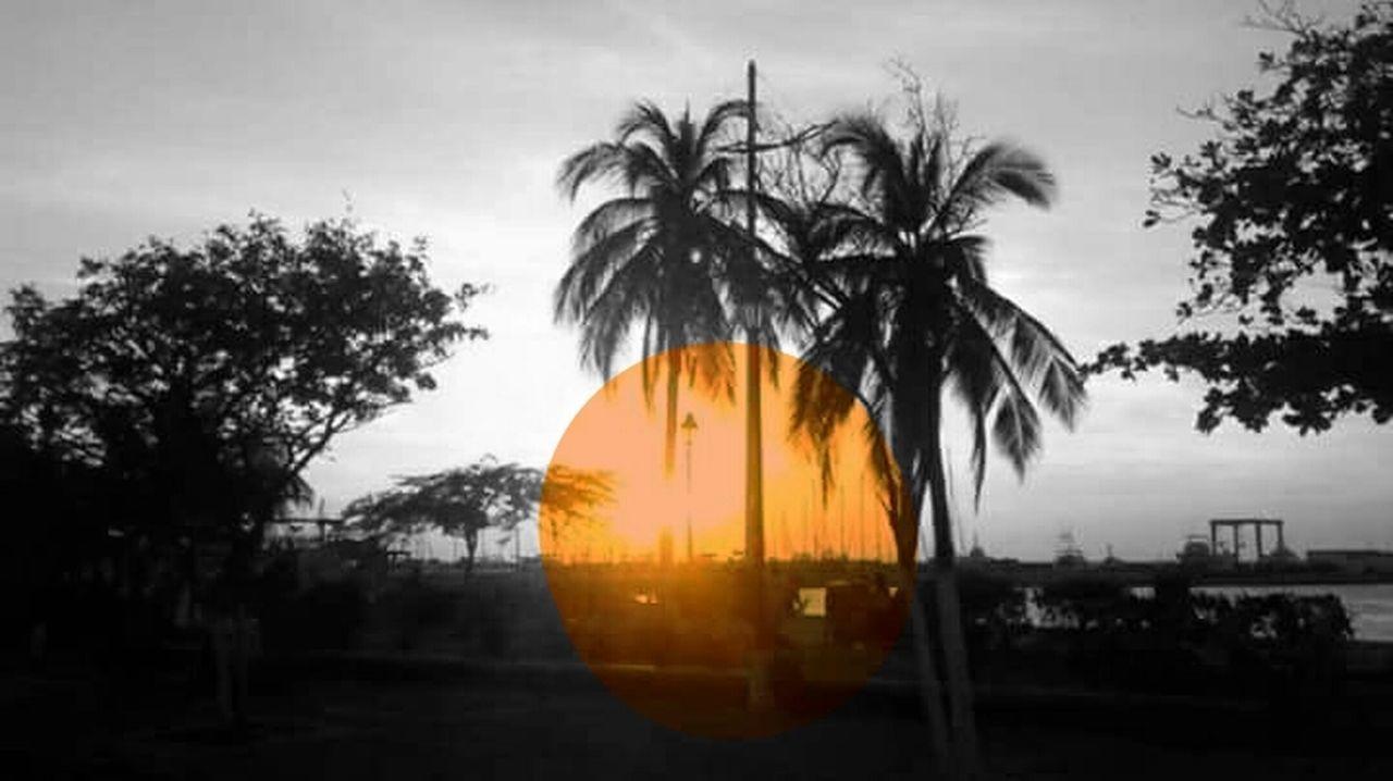 tree, palm tree, no people, outdoors, sky, illuminated, day, nature, close-up