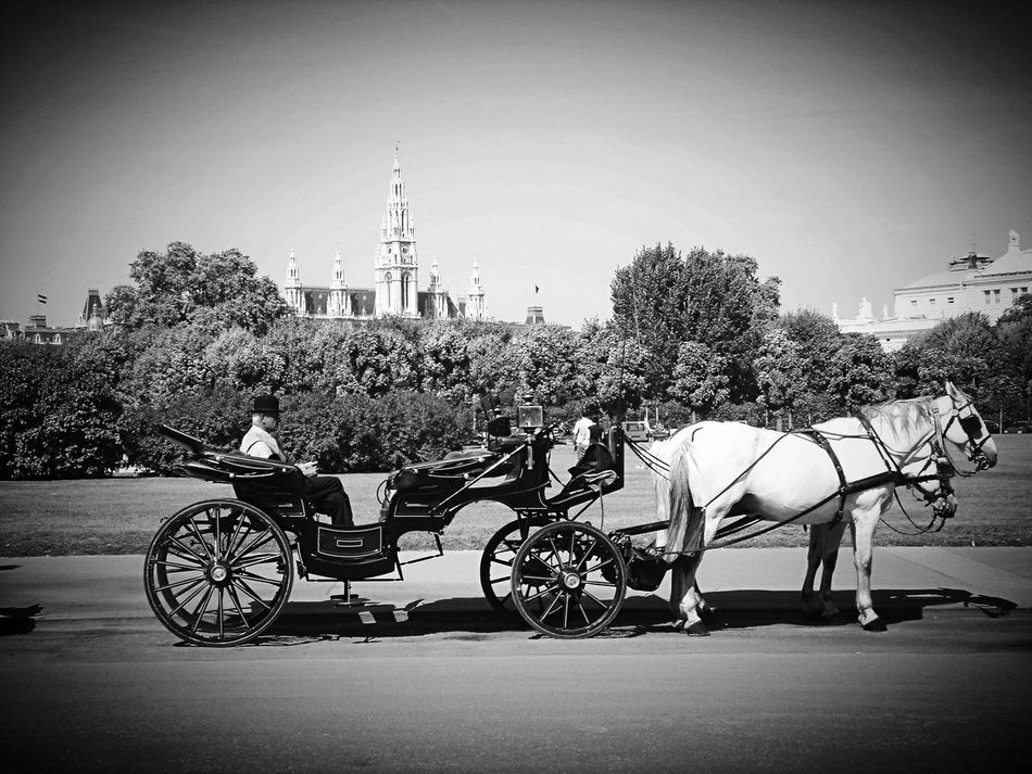 Vienna Horses Hackney Cabs City Life City View  Take Photos Taking Photos Little Things Enjoying Life Romantic Hanging Out Hello World Black And White Black & White