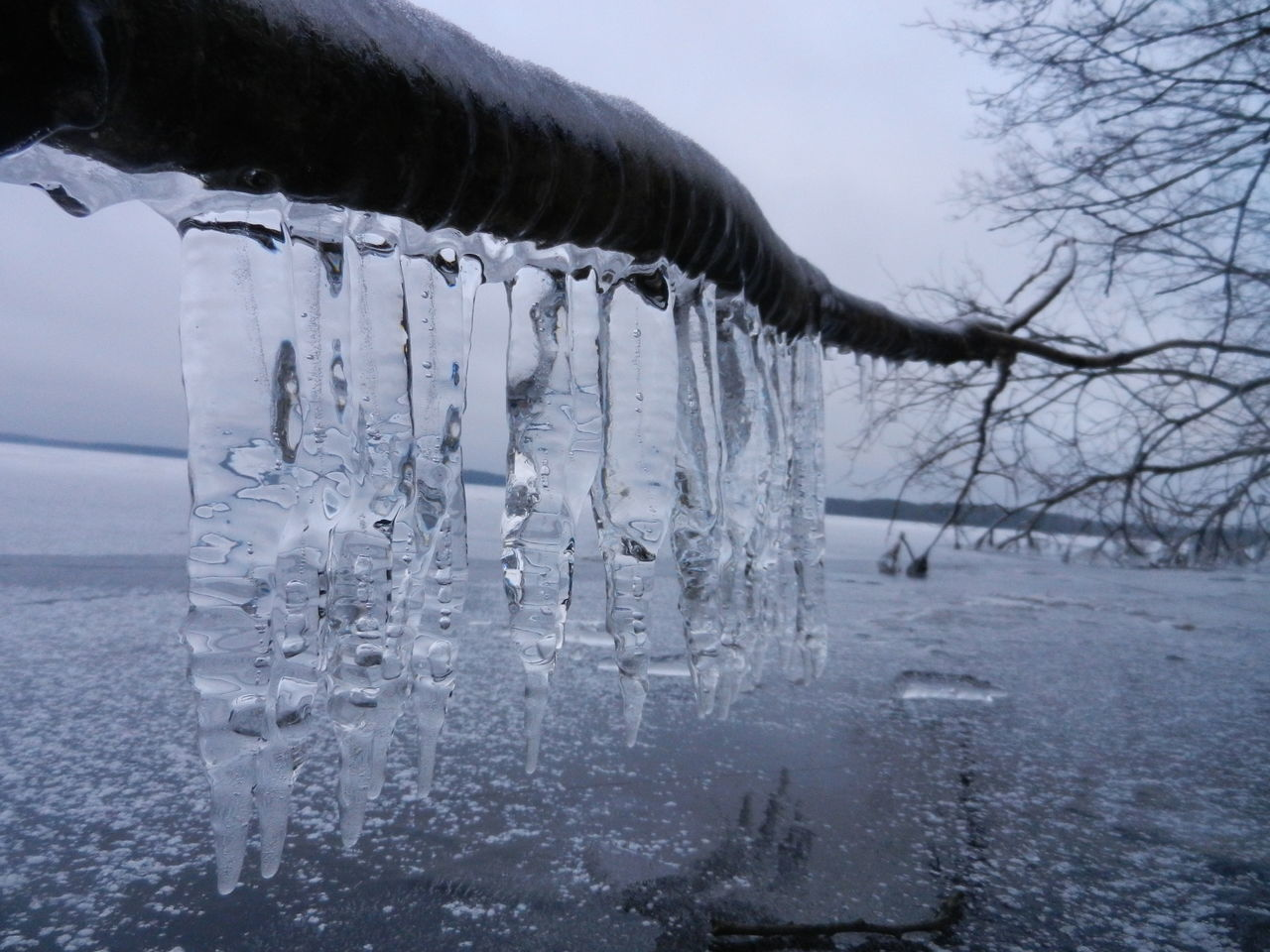 Icicles On Fallen Tree Over Frozen Lake Against Sky