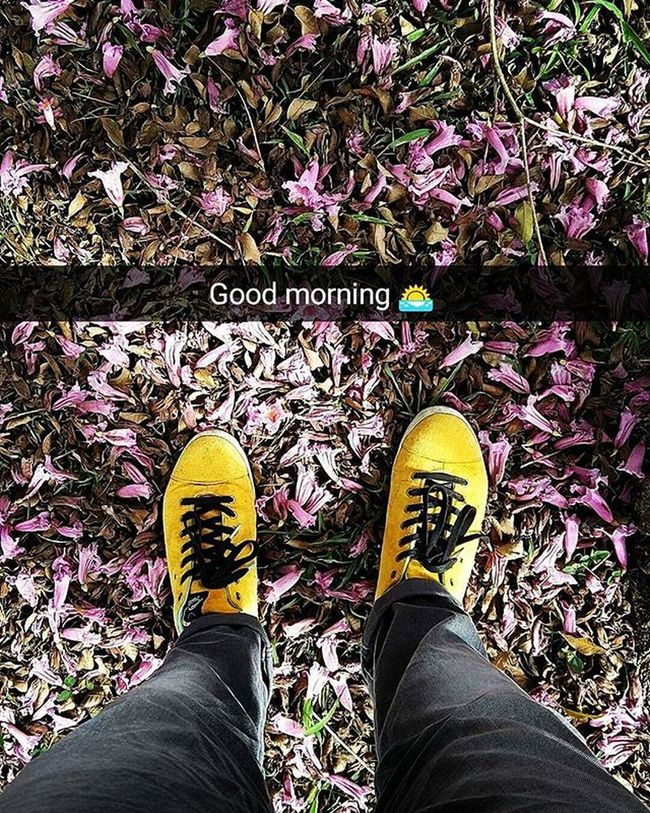 GoodMorningWorld , Pinkflowers