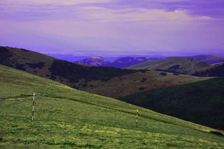 Landscape_photography Pinus Mugo Naturephotography Landscape_Collection Beautiful Nature Mountain View