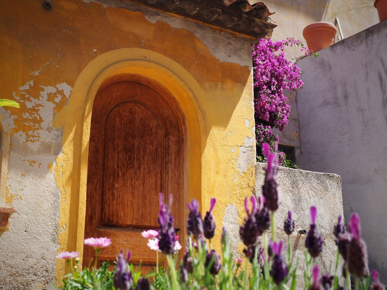 Côte D'Azur Provence South Of France Nice Summer Flower