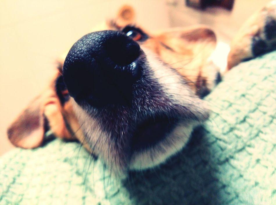 Treli Dog Nose Gos DogLover❤💓💜🐾 Dognose FUNNY ANIMALS Funny Nose 🐶🐺ilovemydogs