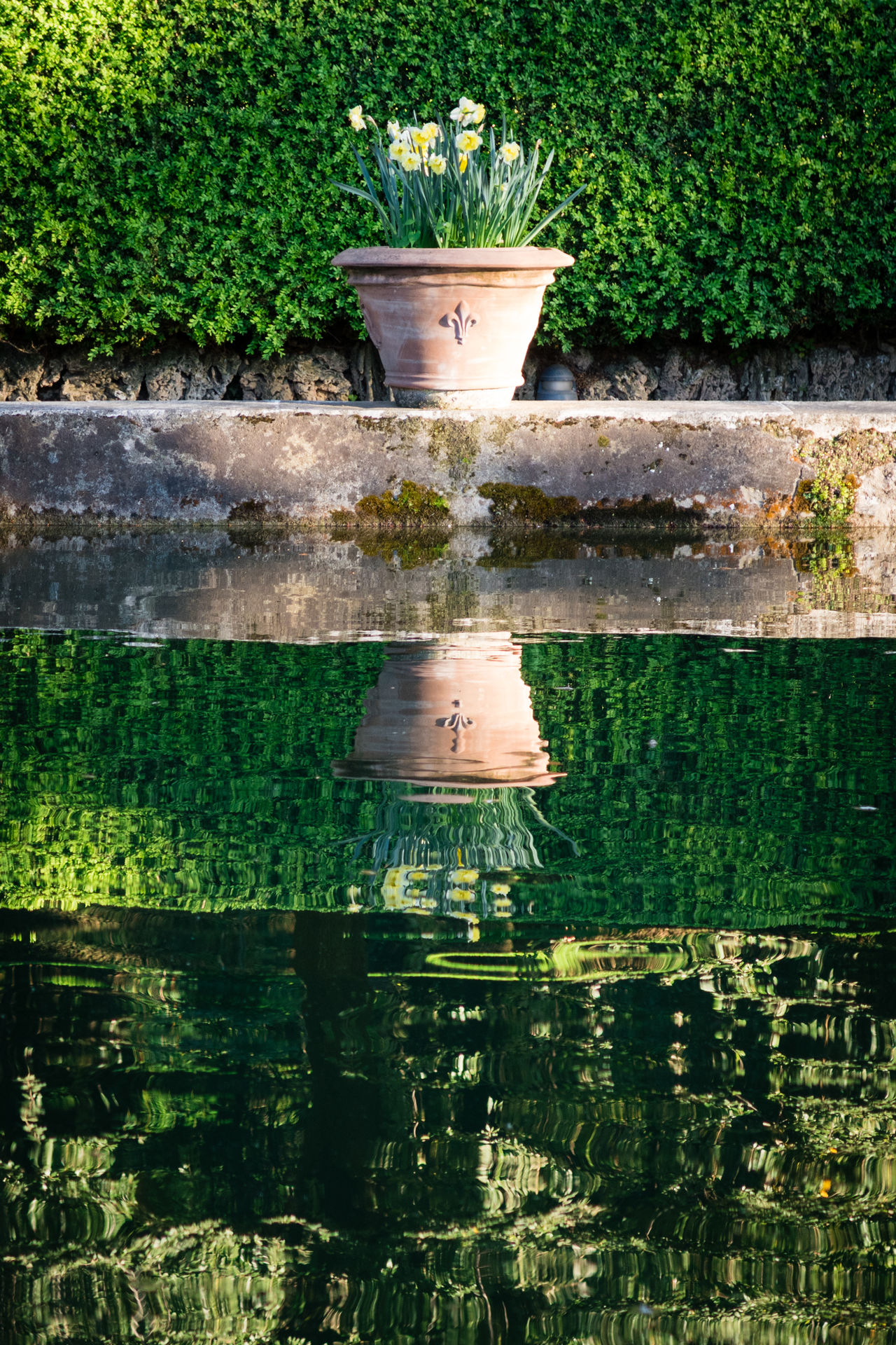 Beauty In Nature Composition Day Flower Pot Flowers Fountain Garden Garden Photography Green Color Growth Historical Building Horizontal Lines Nature Outdoors Plant Reflection Tourism Tourist Attraction  Villa D'Este Water World Heritage Site