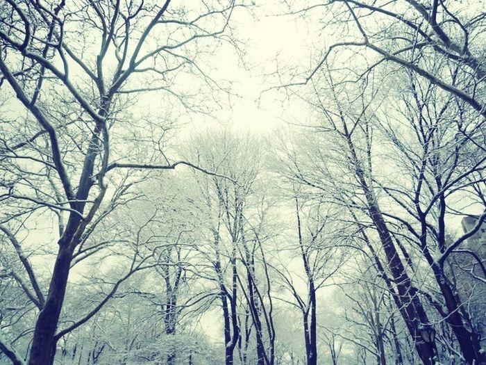 Central Park, New York taken in February 2011