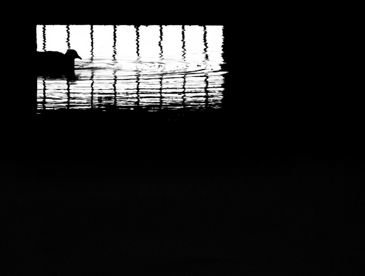 Waterbird Water Water Reflections Silhouette Outdoors Iron Fence Iron - Metal Waves Doğa Animal Bird Birds Of EyeEm  Lake Bridge Darkness And Light Dark Photography Germany Natur Silhouette Refelections Nature GERMANY🇩🇪DEUTSCHERLAND@ Photography Hello World Check This Out