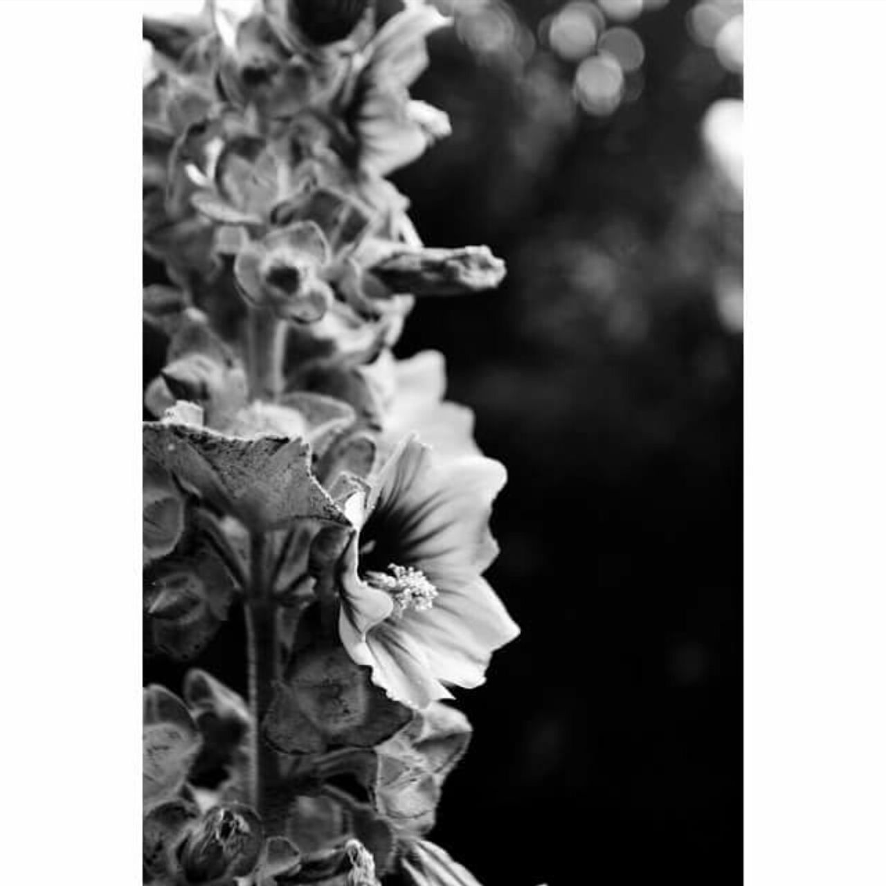 Shades Of Grey On A Hike LandsEnd Flowers Nature Blackandwhite Walking Around Escaping Jogging Relaxing