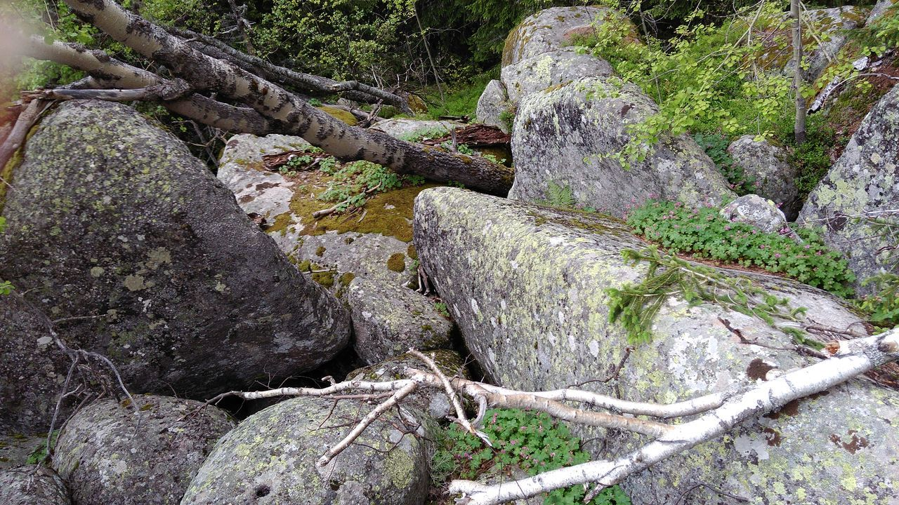 rock - object, no people, day, nature, tranquility, outdoors, moss, beauty in nature, water