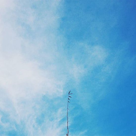 it's easier to do minimalist in the city with those wall and design. but it doesnt mean that you can't do it in the nature. well, all i can think about is how to shot things with the sky as the background. clearer sky is better. . . . . . . . . Mindtheminimal Minimalparadise Minimalismindonesia Ig_minimalist Minimalmood Minimalmood Instagram Instasunda Instaminimal Mindtheminimal Minimalmood Rsa_minimal Minimalmind Minimalexperience Heavenofminimal Minimalismindonesia Minimalist Soulminimalist Paradiseofminimal Tv_simplicity