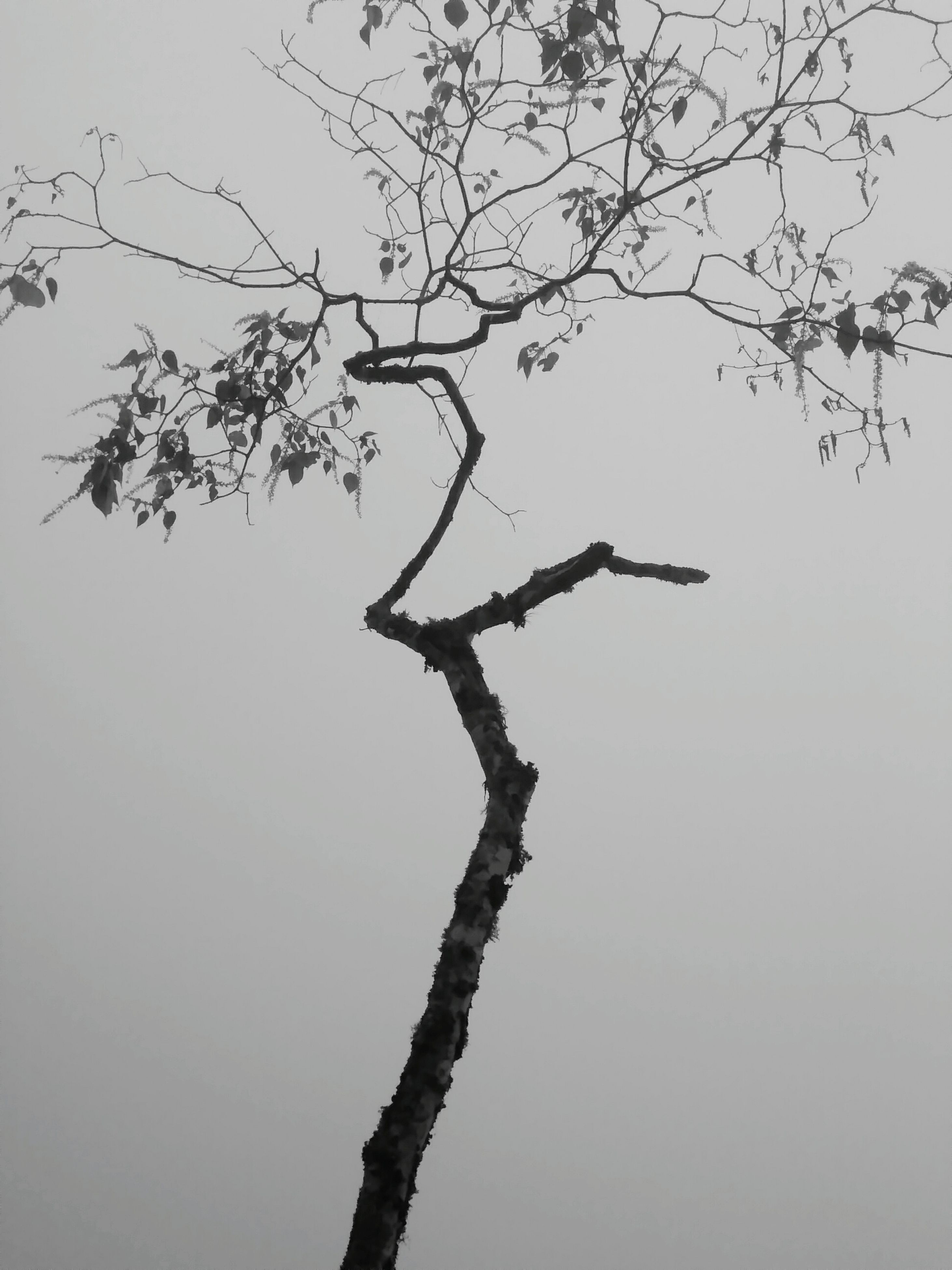 branch, nature, tree, no people, beauty in nature, tranquility, bare tree, outdoors, day