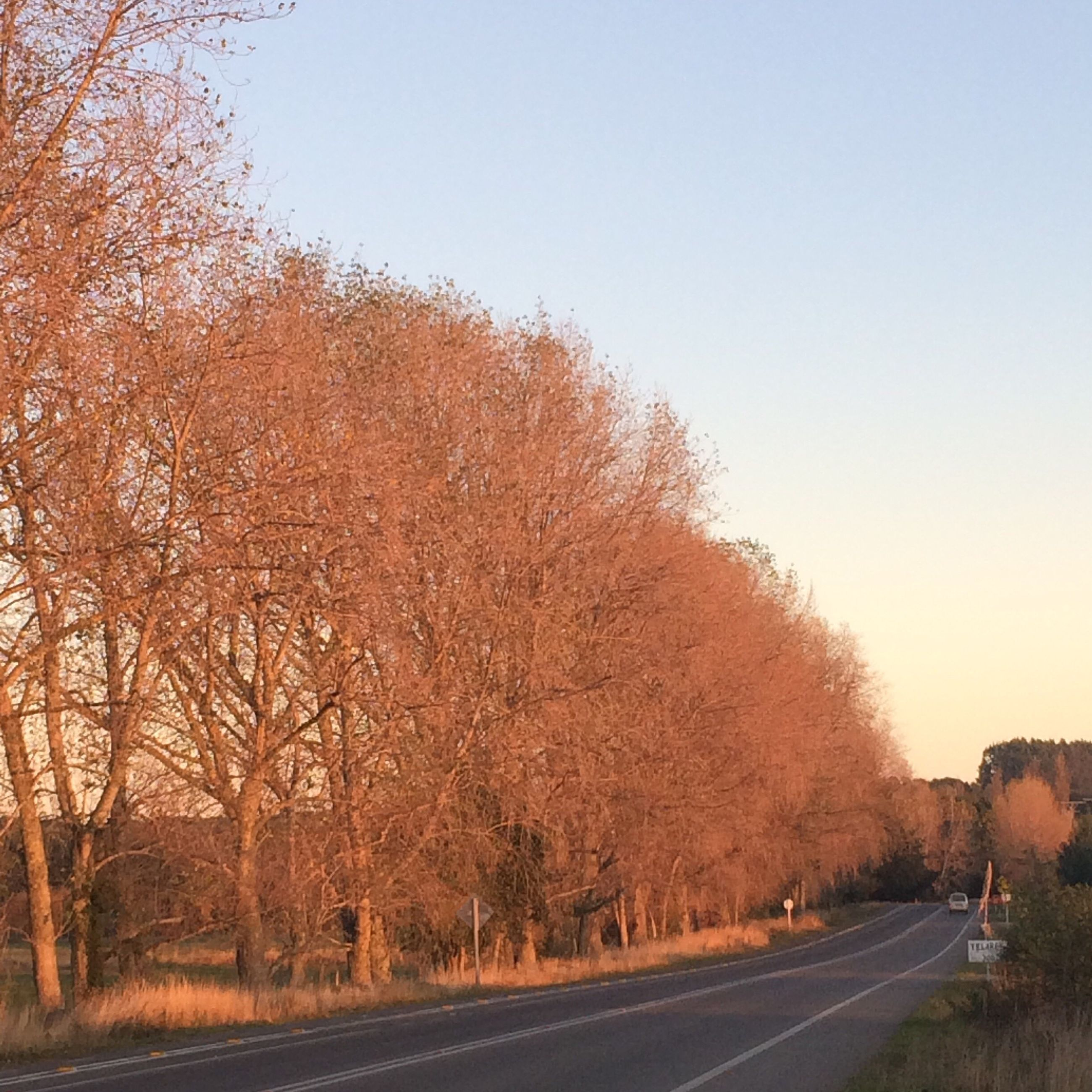 tree, nature, clear sky, road, outdoors, no people, day, sky, beauty in nature
