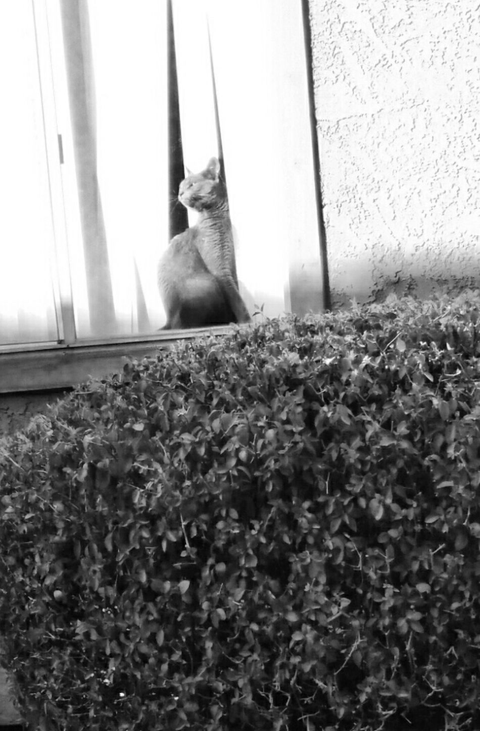 Cat in the window Taking Photos Eyem Best Shots Taking Pictures Eye4photography  Delophotos Taking Pics Coolpic Black And White Animals Window Pane Arizona Cat Lovers