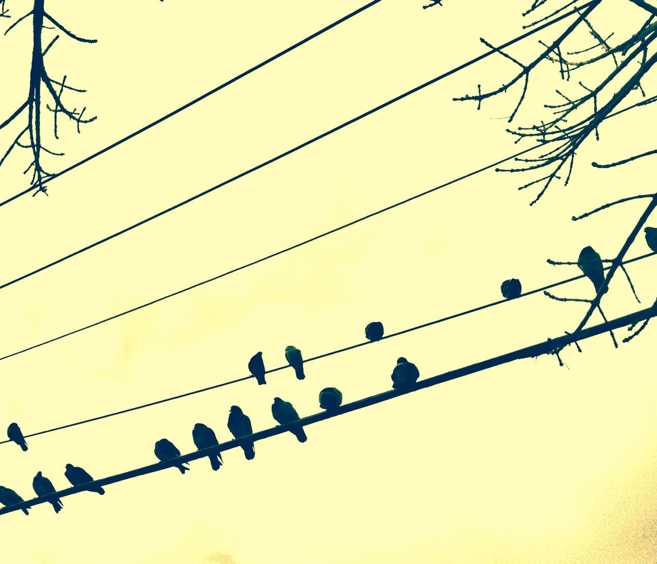 Low angle view of birds on cables against clear sky