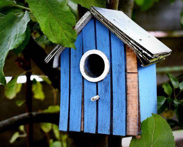 Wood - Material Nature Birdhouse Tree 😚 Backyard Backyardphotography 🌿☘️🌲🍃 Outdoors NIKON D5300 EyeEm Selects