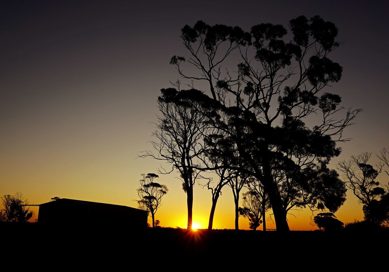 This was a Sunset in the Central Wheatbelt of Western Australia in late Spring of 2015. Trees Sunset Silhouettes Tree Silhouette Australia Shed