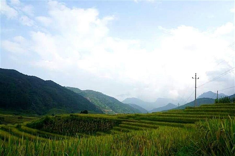 Mu Cang Chai _ Vietnam EyeEm Vietnam Travel Photography Mucangchai Vietnam On The Farm EyeEm Nature Lover