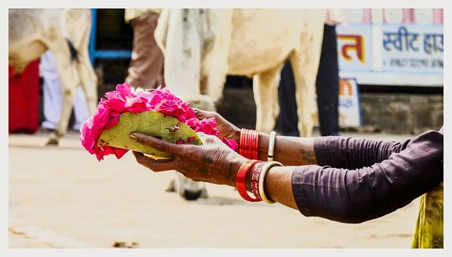 Flower Freshness Streetphotography Life Quotes Rose Petals Rose🌹 Hands Hands At Work Woman At Work Woman's Hand Indian Woman Wrinkled Skin Fragrance FragranceOfNature Pink Color