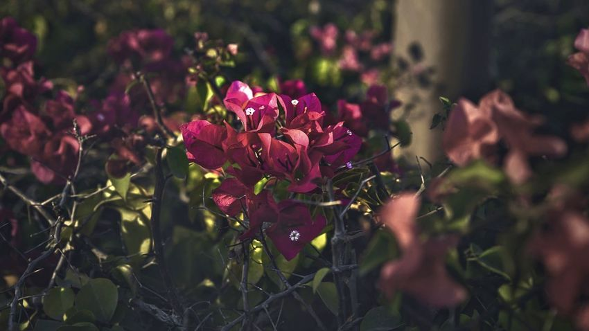 Hidden Flower Pink Color No People Nature Plant Red Outdoors Beauty In Nature Close-up Day Fragility Flower Head