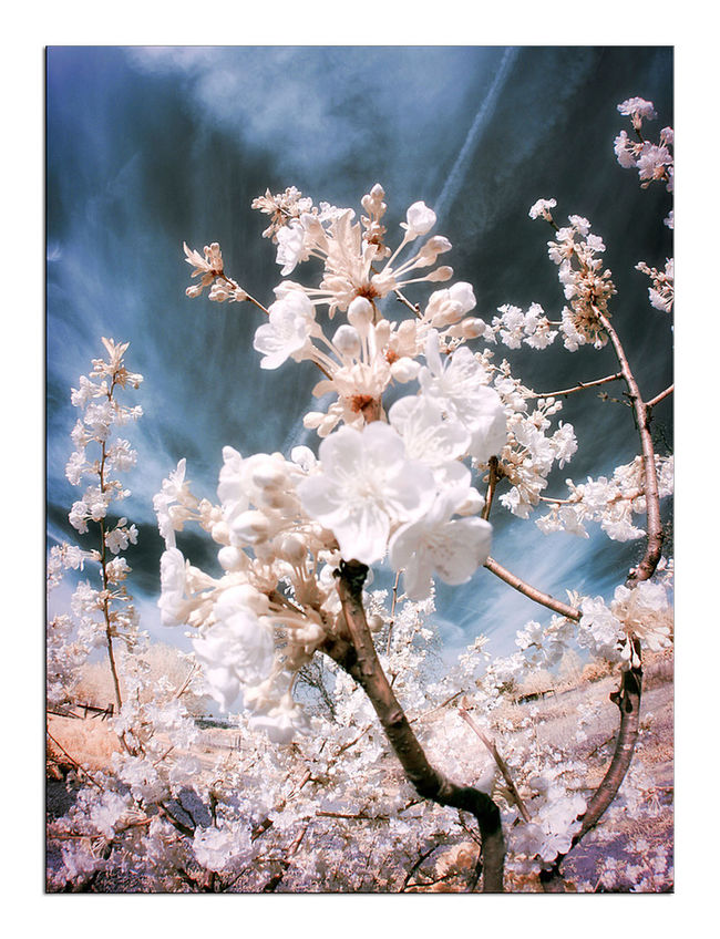 Canon400d Fun Infrared Infrared Photography Landscape Photoshop Spring Travelling