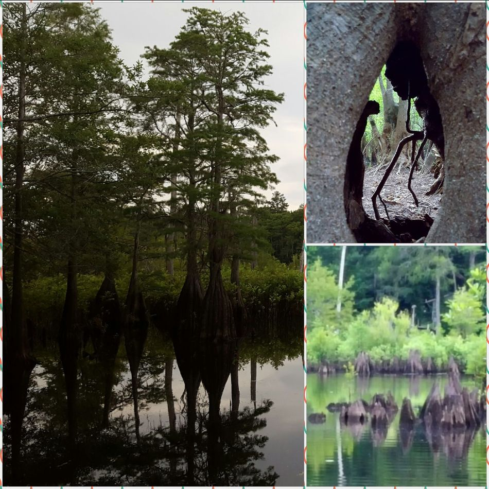 Dead Lake Florida Swamp, Marshland, Bog, Peat Bog, Muskeg, Swampland, Morass, Mire, Moor Swamp Photos Nature_collection Gateway To The Swamp Taking Photos