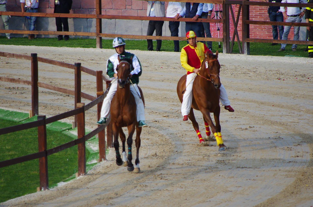 horse, domestic animals, real people, horseback riding, mammal, riding, livestock, field, men, day, leisure activity, outdoors, full length, togetherness, people