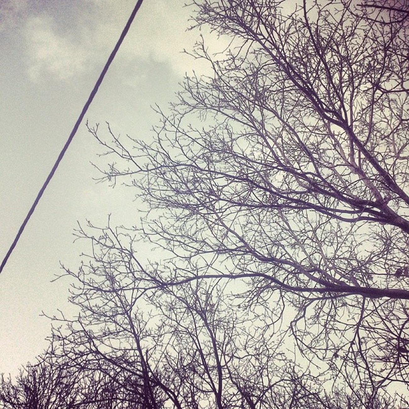 Iran Hamedan Rain Sky clouds Trees branch cable Wire Autumn Fall همدان پاییز درخت شاخه ابر آسمان باران
