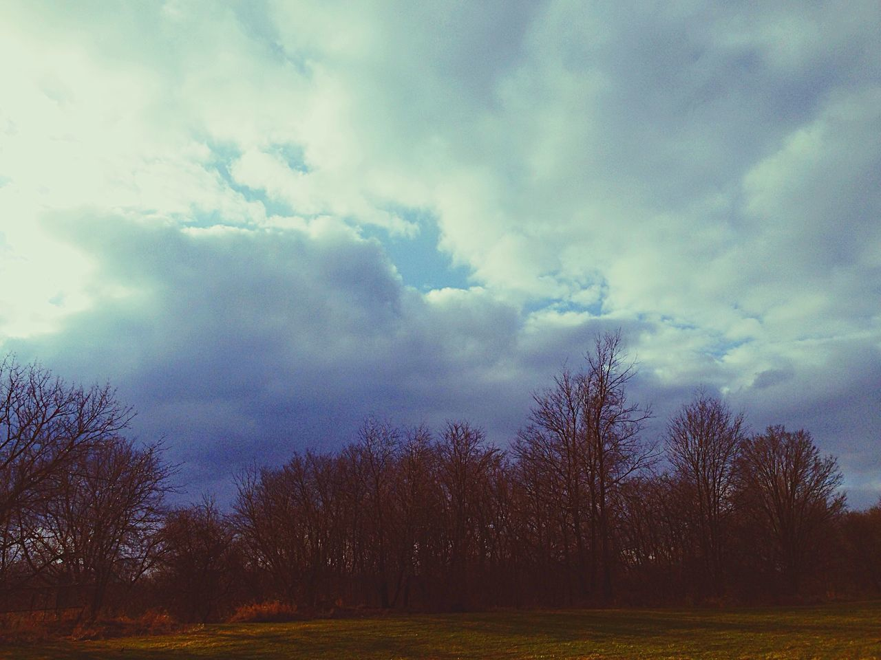 tree, sky, cloud - sky, nature, tranquility, beauty in nature, scenics, tranquil scene, no people, landscape, outdoors, bare tree, day