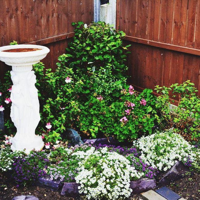 My garden,rockery,bird bath, flowers.