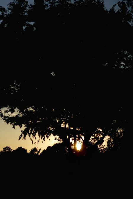 Sunset Silhouettes Trees Beautiful Tadaa Community Shadow depths.