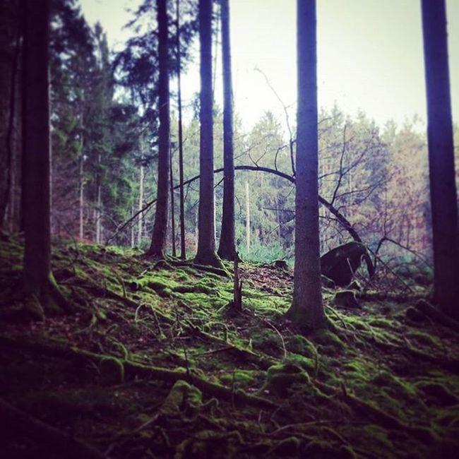 Outdoors Palatinateforest Pfälzerwald Nature Forest Hiking Moss Artbynature Beautifulnature Arch Trees Fairyforest Crosscountry Offtrack