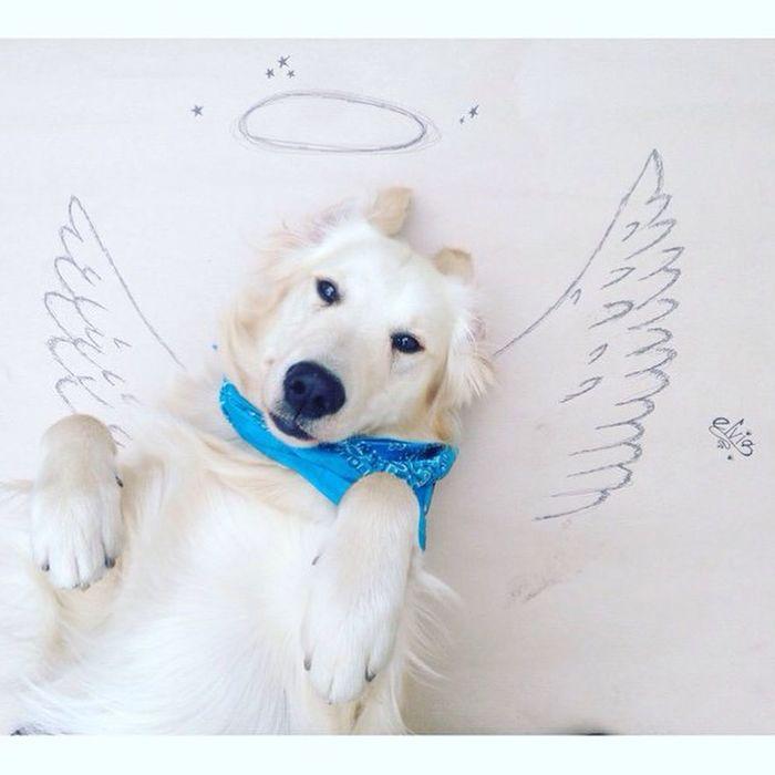 Golden Retriever its my Love & Angel 🐾😇 ~ Elvis ~ Dog ~ Znojmo ~