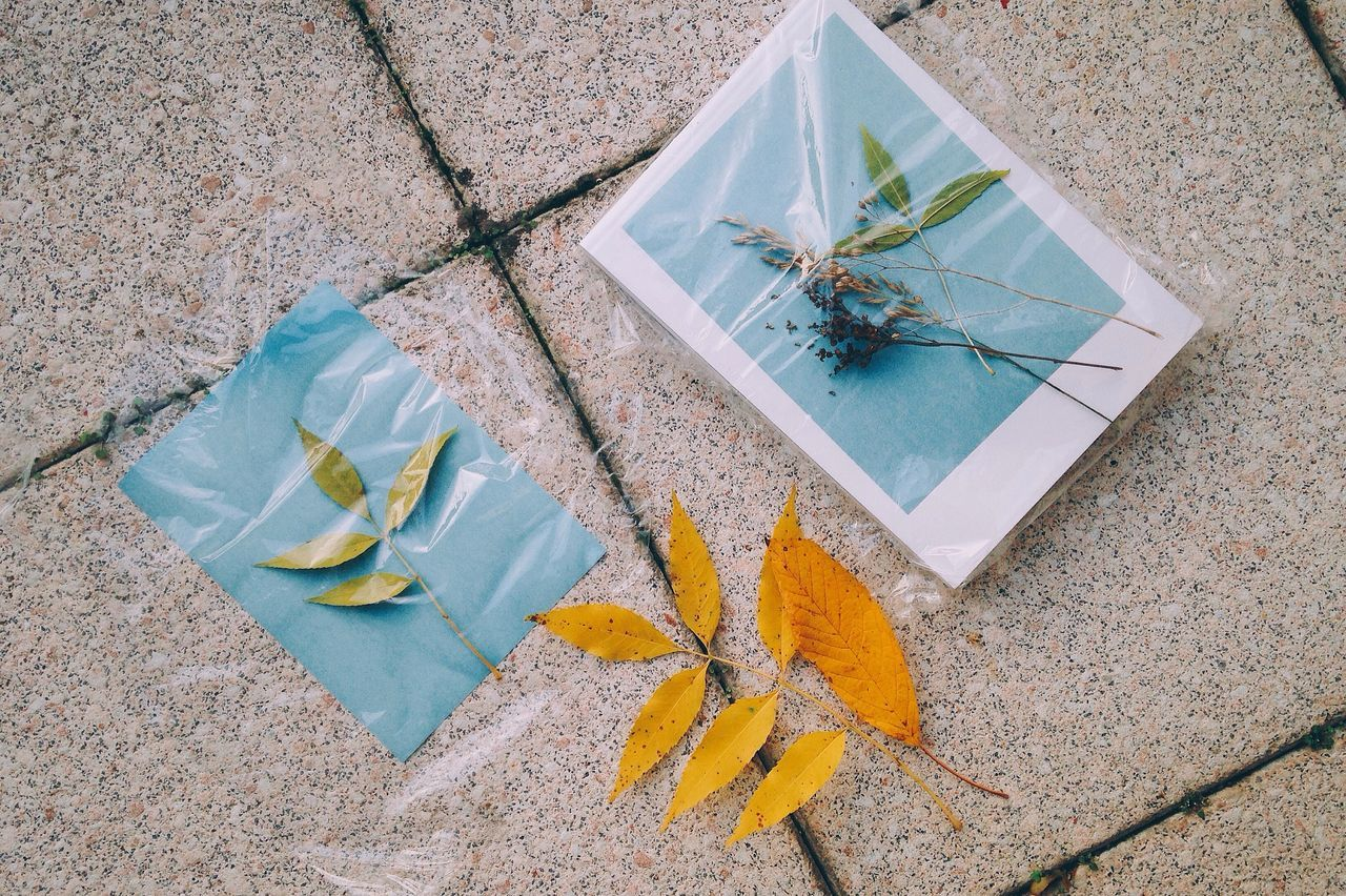 something about autumn 🍂//. Solargraphy Blue Leaves Leaf Collection Autumn Autumn Colors Autumn Leaves Flower Lifestyles Life Enjoying Life Enjoyment Nature Always Be Cozy Season  Fall Enjoy The New Normal Picture Yellow Design Handmade For You Adapted To The City