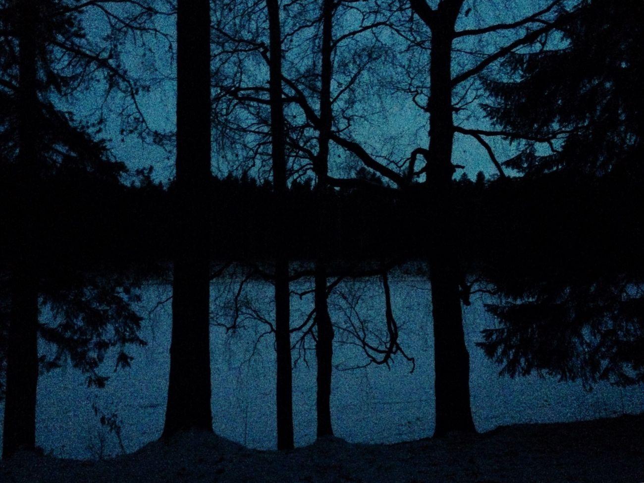 Winter Forest Followme Likeforlike