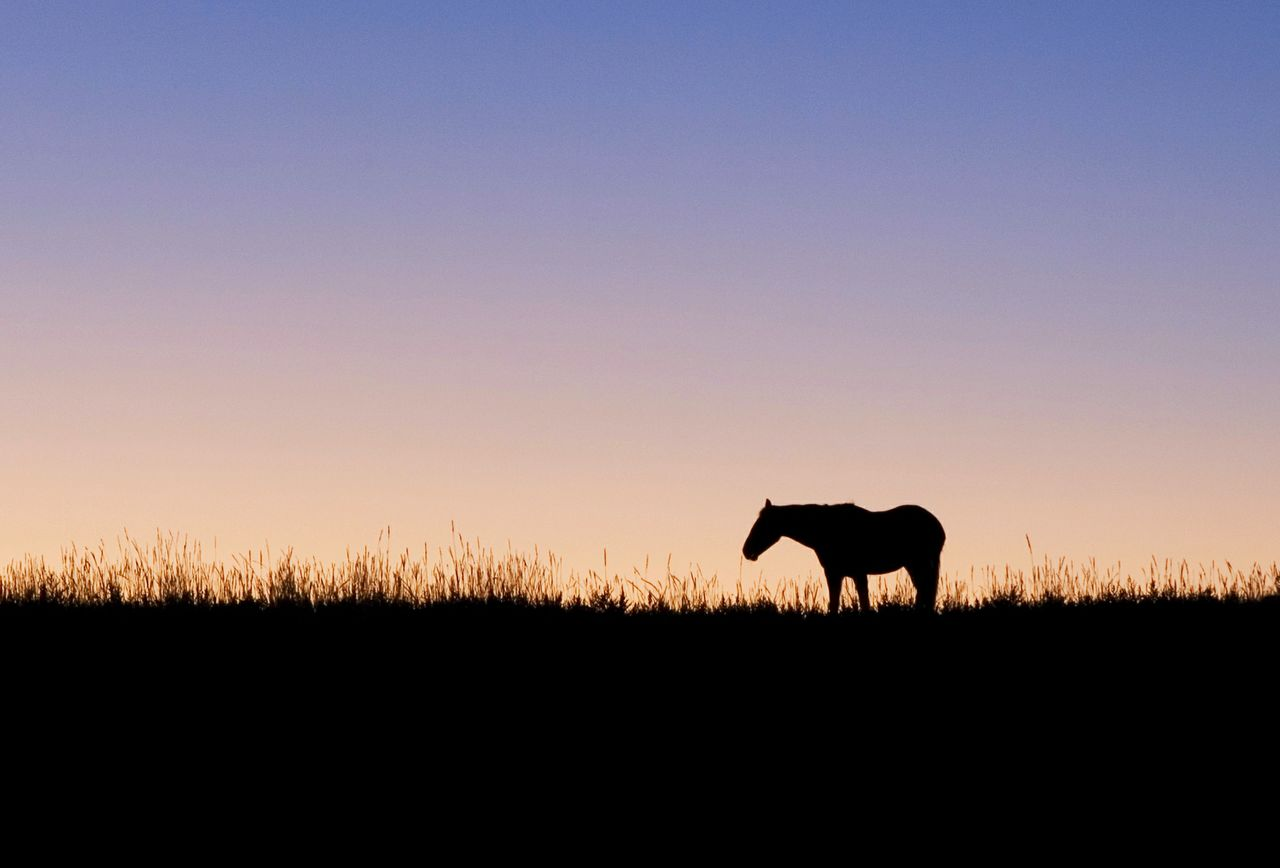 Horse silhouette Landscape Animal Themes Side View No People Clear Sky Sky Silhouette Sunset Outdoors Animal Domestic Animals Beauty In Nature Scenics Ranch Ranch Life Colorado Night Horse Silhouette Sunsets Rural Scene Equine Horse Beautiful Sunset Pink Sky One Animal