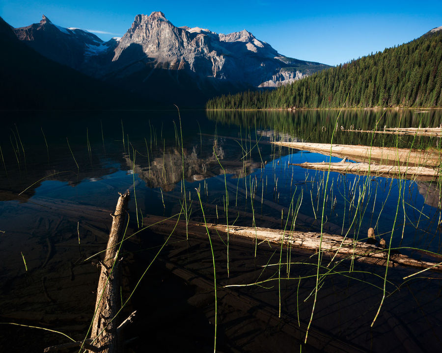 Canadian Rockies Adventure Amazing Baffi Campking Close-up Contrast Forest Jasper Logs Mountains Out Outdoor Photography Outdoors Refelction  Taking Photos Trees YOHO Camp