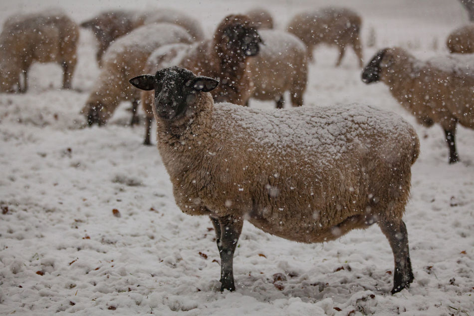 Beautiful stock photos of schneeflocken,  Animal Themes,  Beauty In Nature,  Cute,  Day