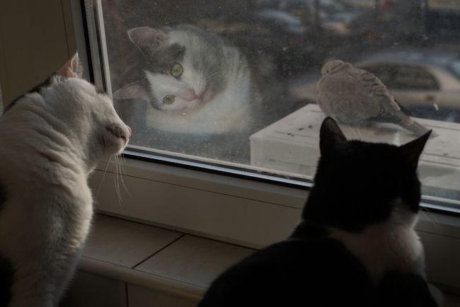 X100tfujifilm Cats Rosia Grig
