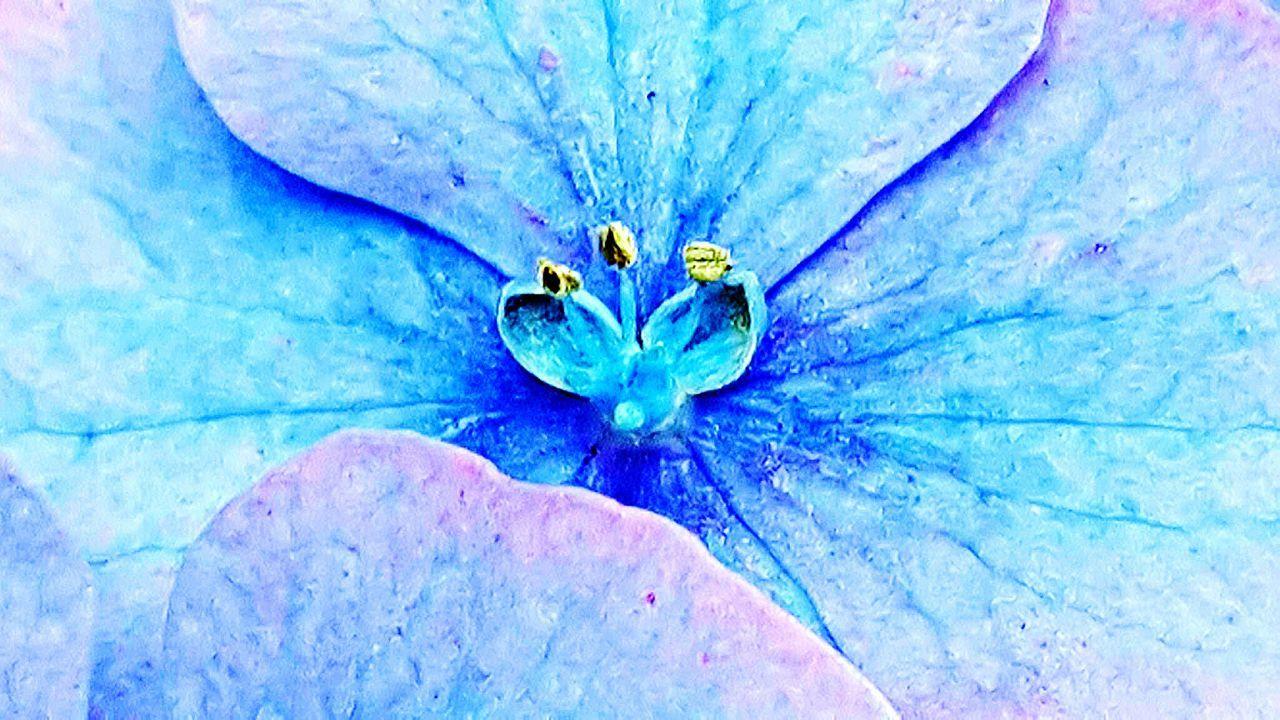 Flowerpower Flowers,Plants & Garden Gardener's Stigmata Macro_flower Stamens Flower Collection Flowerporn Taking Photos 🌷 Flowers 🌹 Macro_collection