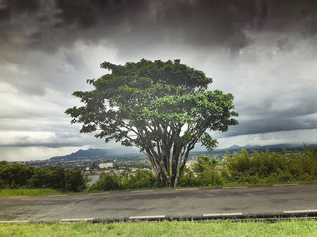 tree, cloud - sky, growth, landscape, nature, sky, tranquility, day, tranquil scene, no people, scenics, beauty in nature, outdoors, mountain, lone, grass