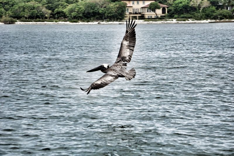 Water Bird Sea Flying Animals In The Wild Day Waterfront No People Nature Spread Wings Outdoors Animal Themes Sky
