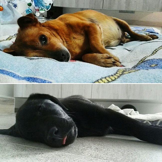 Sundaymood Positivevibes Sleeping Doggy Loveanimals Doggiet Dogs Lovedogs GoodTimes Vitadacani Dogstyle DoggyLove Collage Picsart Picoftheday Beautiful Picture