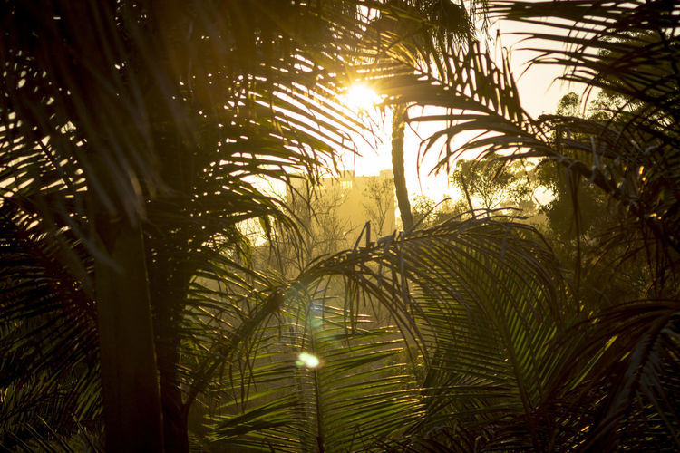 Palm Fronds Palm Tree Tranquility Balboa Park Evening Plam Summer Sun Sunset Warm