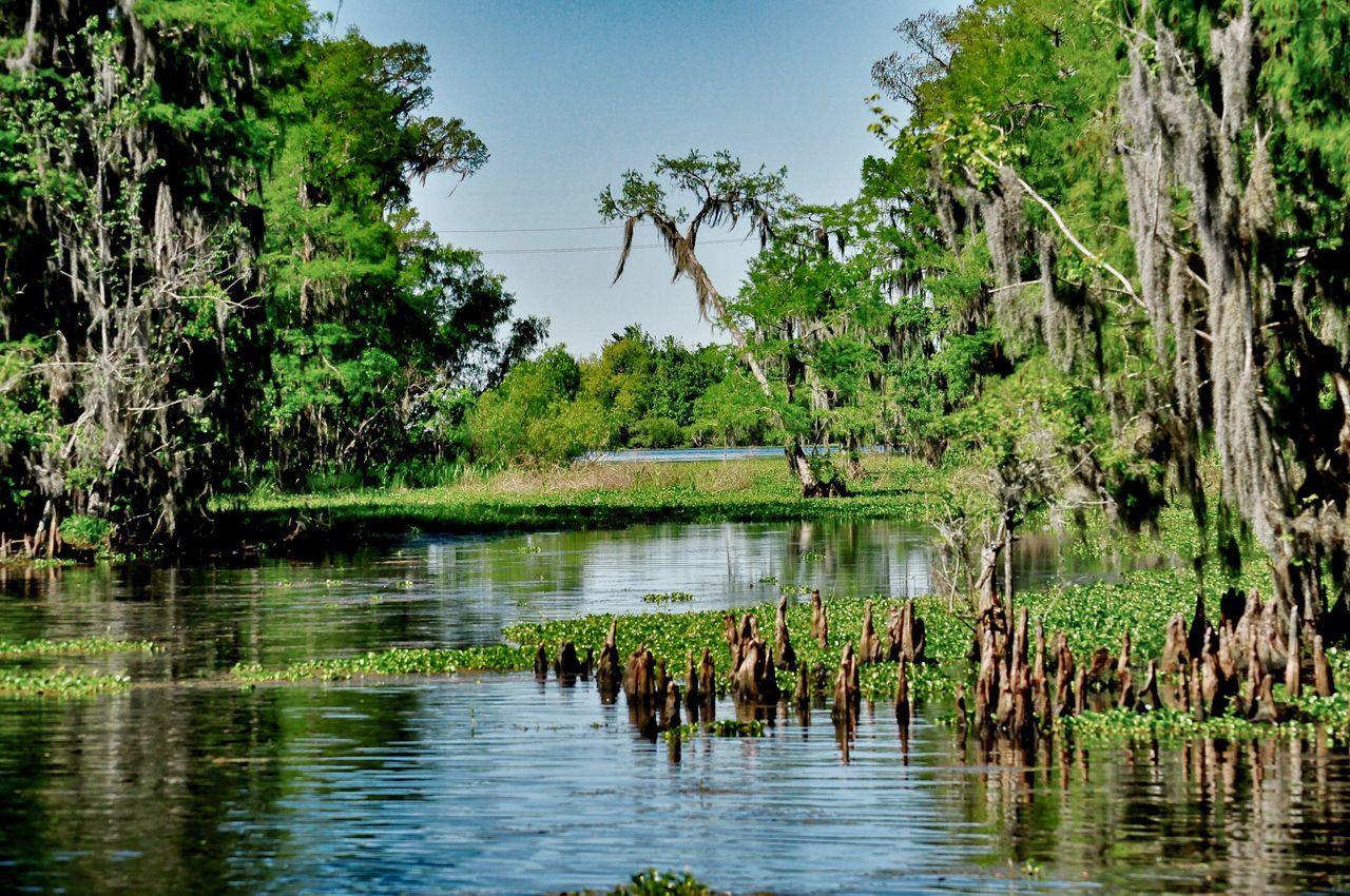 Tree Water Nature Reflection Growth Bird Animals In The Wild Outdoors Day Tranquility Animal Themes No People Lake Beauty In Nature Swamp Louisiana Swamp @ Bayou Segrette, Louisiana Shades Of Green
