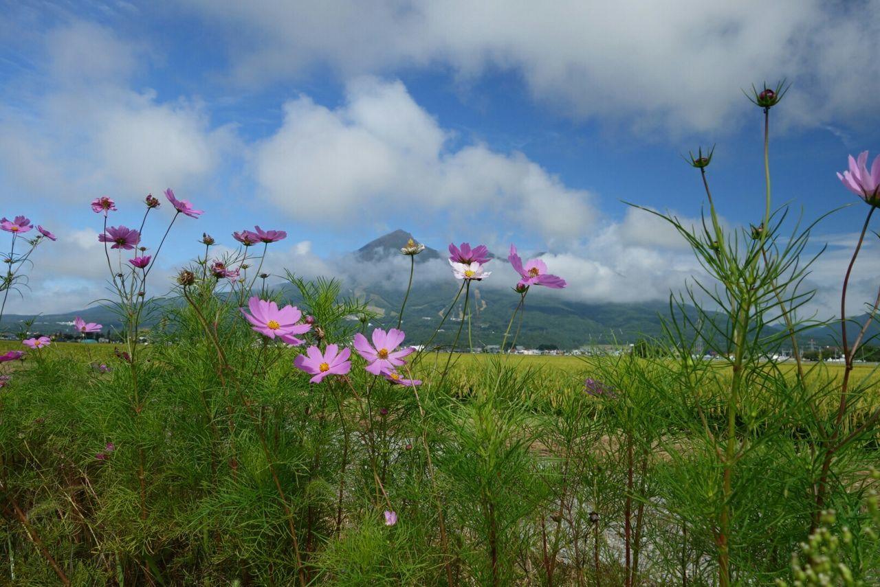 Cosmos Mountain Mt.Bandai Nature Relaxing