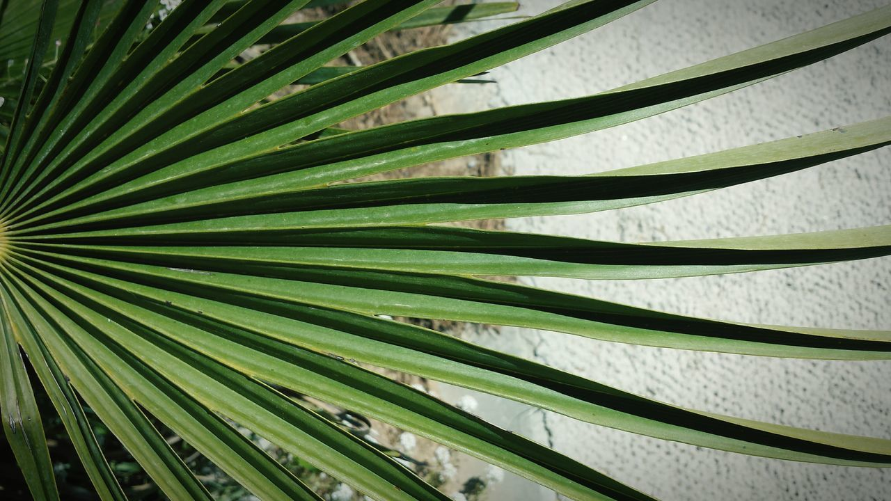 Palm Leaf Botany Leaf Palm Tree Nature Close-up Growth Biology Green Color Backgrounds Environment Outdoors Day