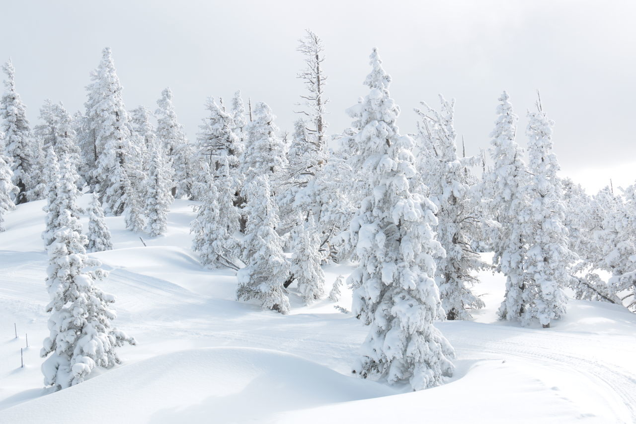 Record breaking snow depth, 13 meters = 40 feet - Winter Wonderland Cloud - Sky Cold Temperature Forest Frozen Heavenly Skies Ice Landscape Mountain Nature No People Outdoors Pine Tree Polar Climate Scenics Sky Snow Snowing Tranquil Scene Tree Vacations White Color Winter Wrapped
