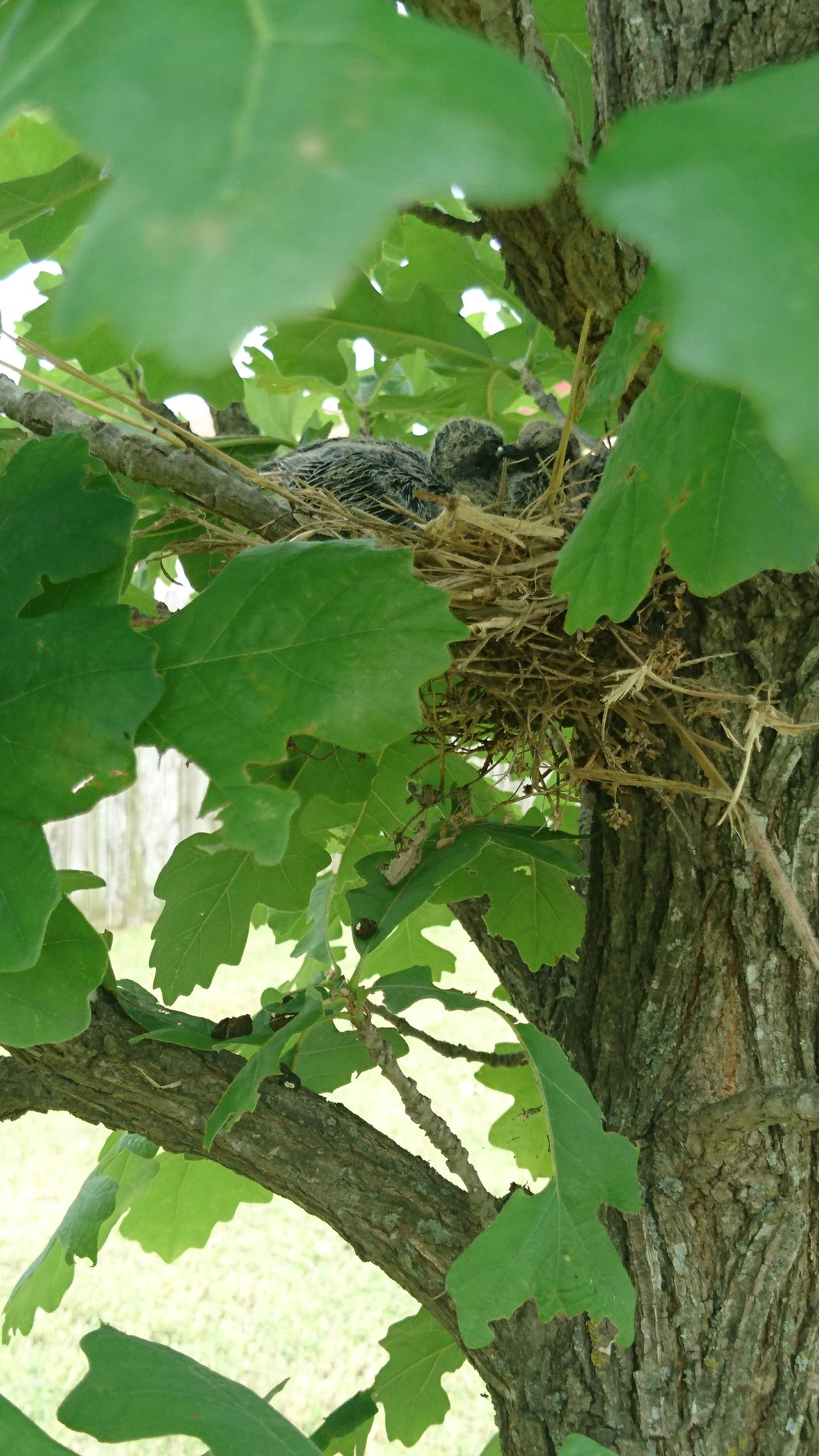Baby Birds In Nest Bird Nest Closeup Bird Nest On The Tree Bird Photography No People Outdoors Day Nature Animal Wildlife Animal Themes Trees And Bushes Beauty In Nature Viewing The World Outside