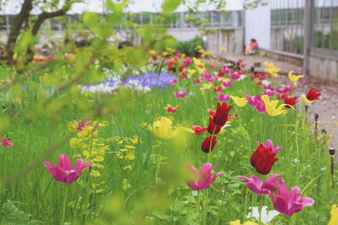 Flower Growth Petal Plant Nature Beauty In Nature Fragility Blooming Freshness Flower Head No People Outdoors Leaf Day Green Color Pink Color Yellow Close-up Building Exterior Architecture Colorful Color Palette Garden Growth Full Frame