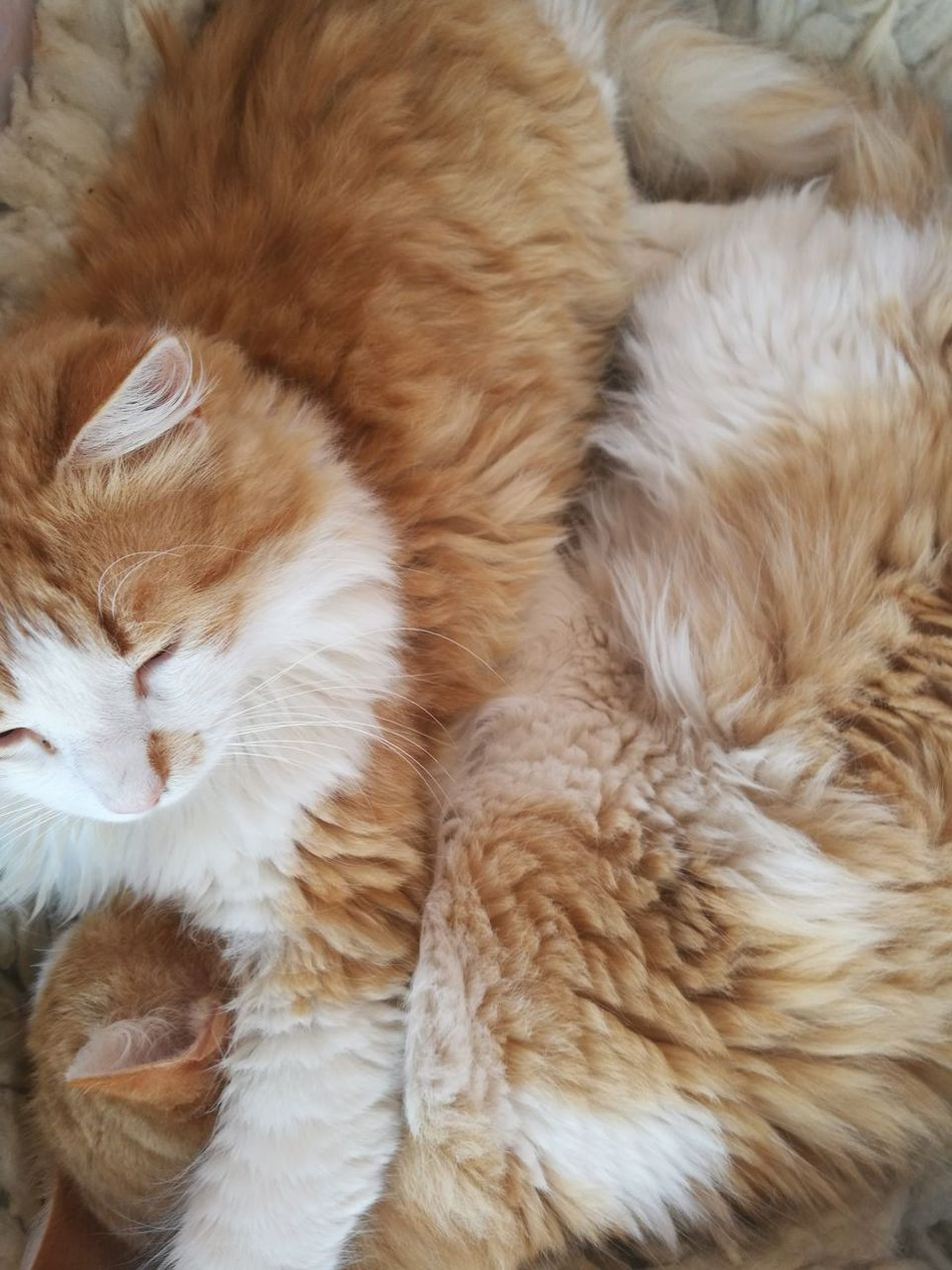 Domestic Cat Sleeping Relaxation No People Beauty Love My Cats